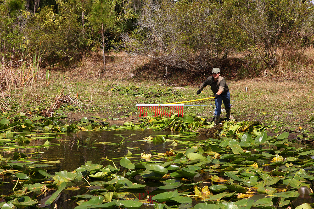 Removing Aquatic Weeds to Prevent Regrowth Image