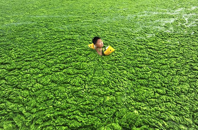How to get rid of algae in a pond? Banner Image